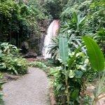 Foto de Diamond Falls Botanical Gardens