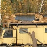 Photo de Beekse Bergen Safari Park