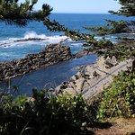 صورة فوتوغرافية لـ Shore Acres State Park