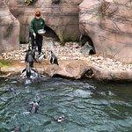 Фотография Colchester Zoo