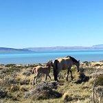Zdjęcie Lago Argentino