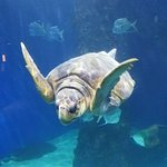Virginia Aquarium & Marine Science Centerの写真