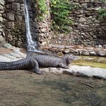Foto van Palmitos Park