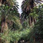 Bilde fra Mogan Verde