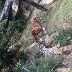 صورة فوتوغرافية لـ Ishikawa Zoo