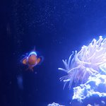 Photo of Key West Aquarium