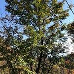 Foto di Mt. Rokko