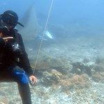Photo of Manta Rhei Dive Center