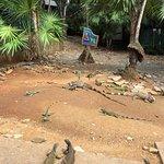 Foto de Arch's Iguana and Marine Park