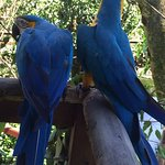 Photo of Birdworld Kuranda