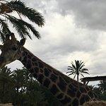 Photo of Rio Safari Elche