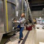 Gambino Winery 사진