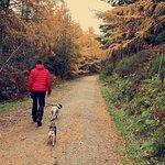 ภาพถ่ายของ Coed Llandegla Forest