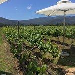 Foto de Bramon Wine Estate