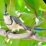 Bird Guide Cornelio Photo