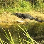 Photo of Everglades Day Safari