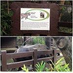 Rainforest Park Foto