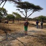 zebra guesthouse trips