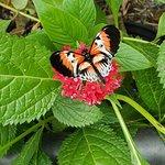 Billede af Butterfly World