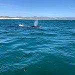 Whale Watchers Hermanusの写真