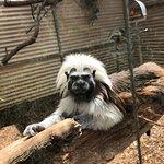 Billede af Halls Gap Zoo