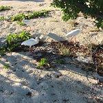 Zdjęcie Bahia Honda State Park and Beach