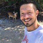 Zdjęcie National Key Deer Refuge