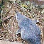 普哈图企鹅栖息地照片