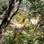 Leura Cascades照片
