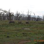 Foto de Lago Nakuru