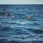 Foto van Padstow Sealife Safaris