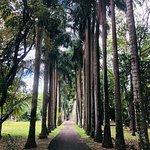 Bild från SSR Botanic Garden