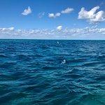 Rainbow Reef Dive Center-billede