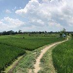 Photo de Alam De Ubud