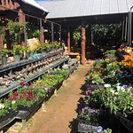 Wildseed Farms Foto