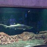 Billede af National Aquarium