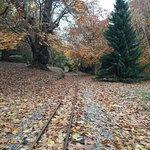 ภาพถ่ายของ Bicton Park Botanical Gardens