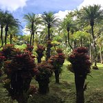 Jardin de Balata Photo