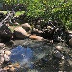 Caldera Hot Springs Foto