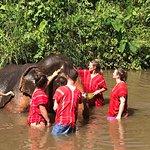 Foto de Bamboo Elephant Family Care