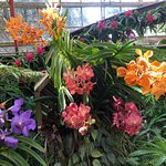Marie Selby Botanical Gardens의 사진
