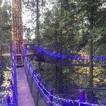 Photo of Capilano Suspension Bridge Park