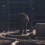 Billede af Phoenix Zoo
