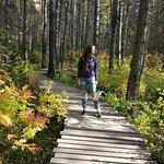 Stolby National Park Foto