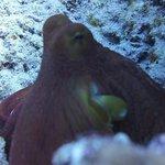 صورة فوتوغرافية لـ Reef Pirates Diving