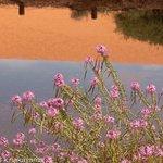 ภาพถ่ายของ Coral Pink Sand Dunes State Park