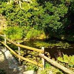 Bilde fra Jardin Botanico Marimurtra