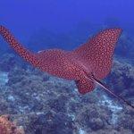 Bilde fra Palancar Reef
