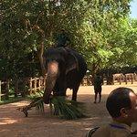 Valokuva: Pinnawala Elephant Orphanage