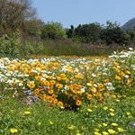 Photo of Kirstenbosch National Botanical Garden
